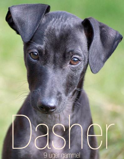 Dasher at just 9 weeks of age!